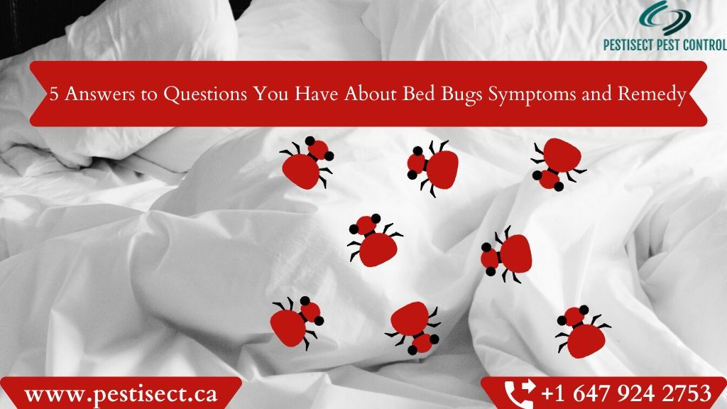 5 Answers to Questions You Have About Bed Bugs Symptoms and Remedy
