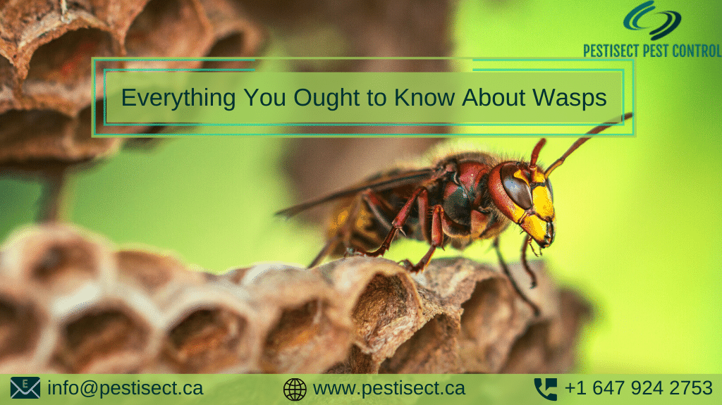 Everything You Ought to Know About Wasps