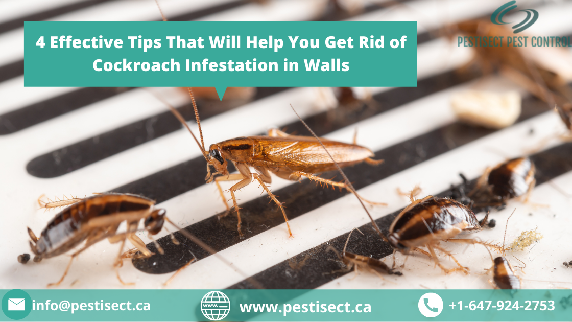 4 Effective Tips That Will Help You Get Rid of Cockroach Infestation in Walls